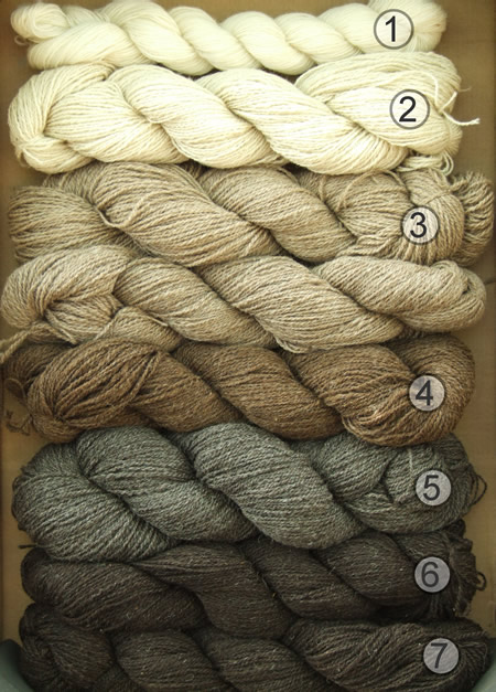 Hanks or skeins of organic yarn